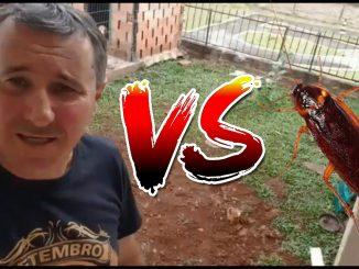 Man vs Kecoak