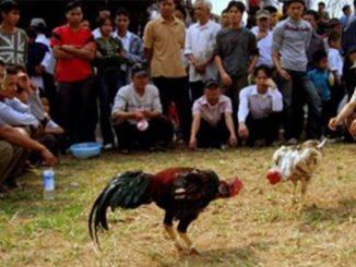 4 Orang Tewas di Tembak di Arena Sabung Ayam